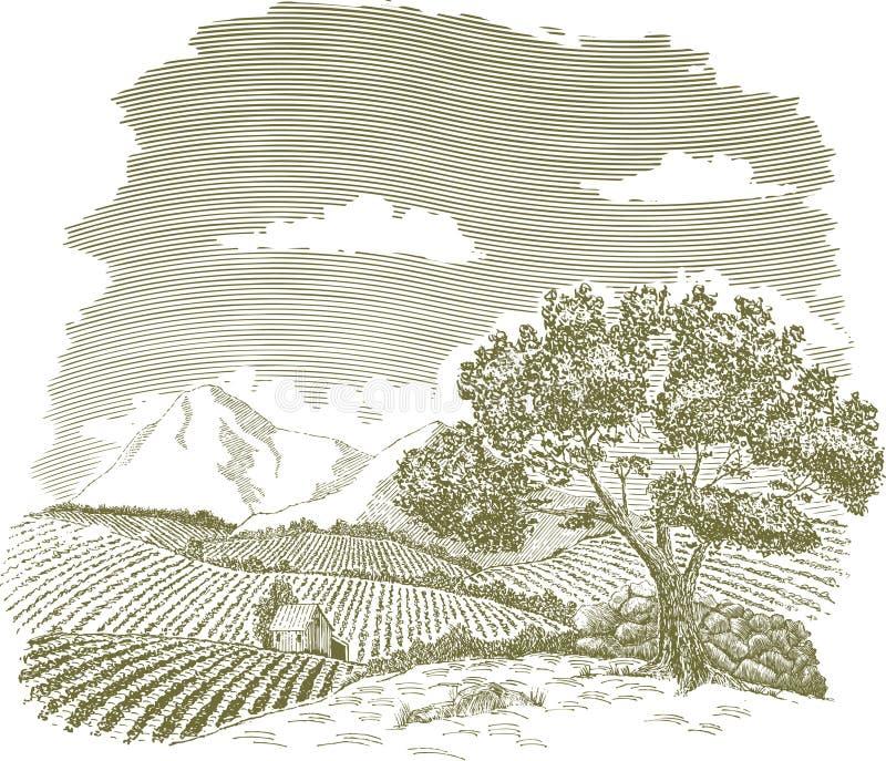 Desenho do campo de exploração agrícola da montanha ilustração do vetor