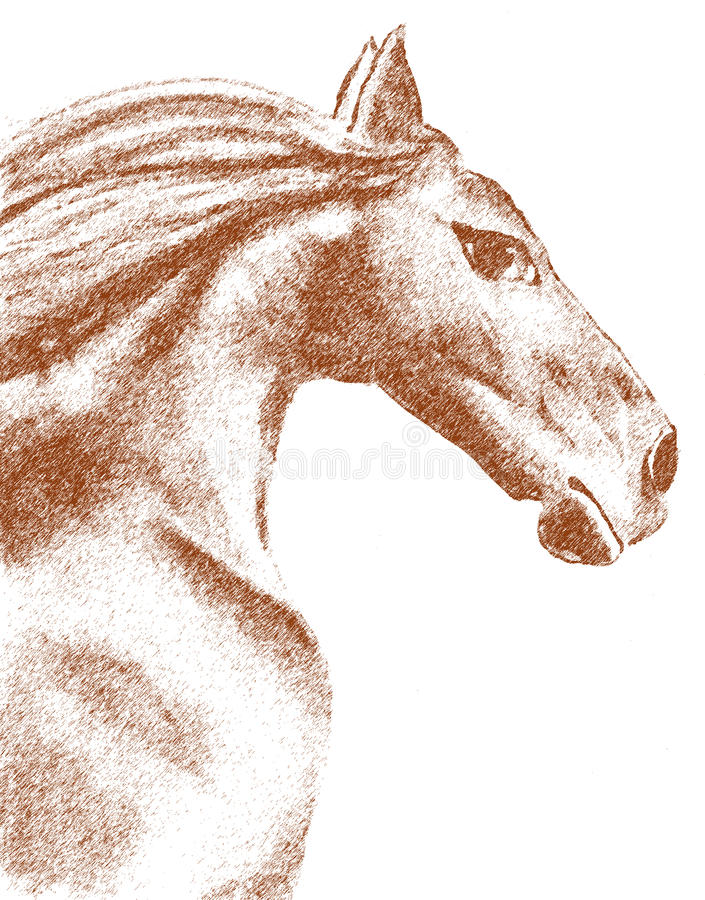 Desenho do cavalo ilustração stock