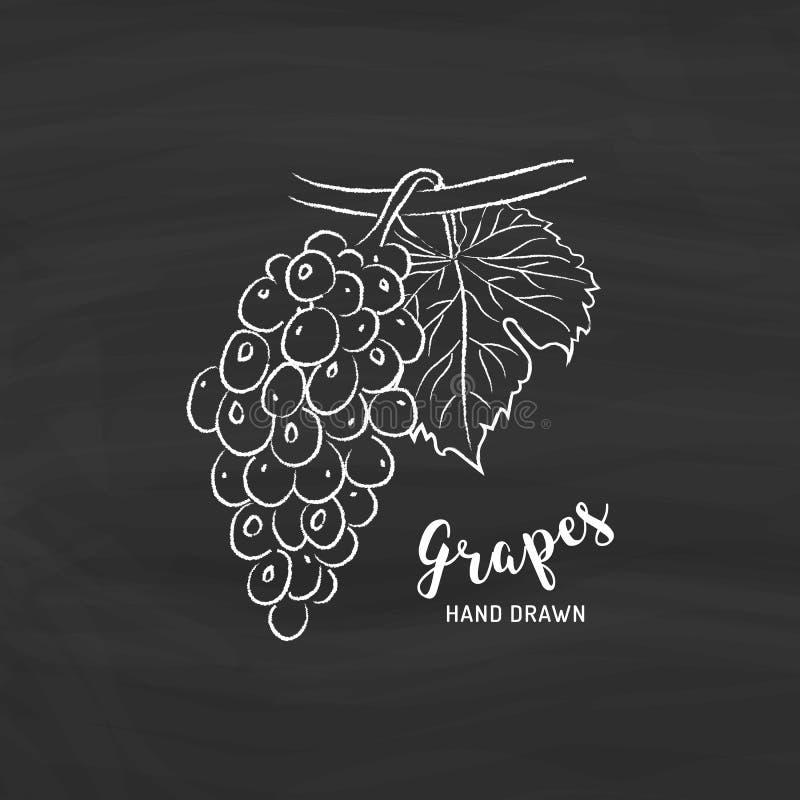Desenho do fruto das uvas Esboço das uvas com giz no quadro-negro Ilustração do vetor ilustração do vetor