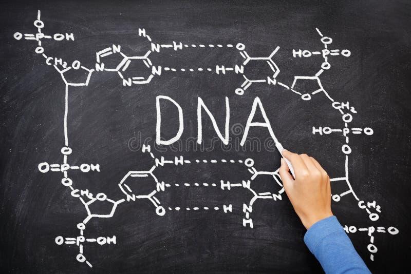 Desenho do quadro-negro do ADN fotografia de stock