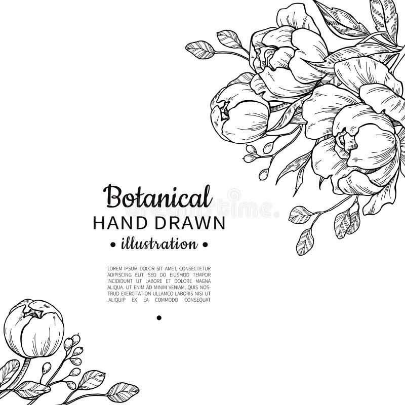 Desenho do quadro do vetor da flor do vintage Peônia, rosa, folhas e jujubas ilustração stock