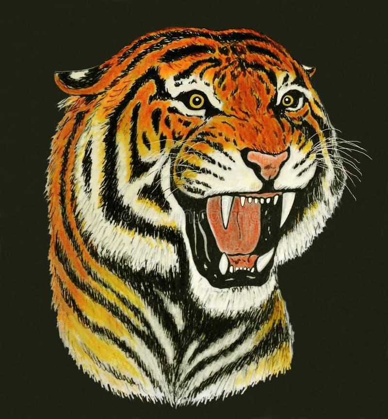 Desenho do rugido do tigre ilustração stock