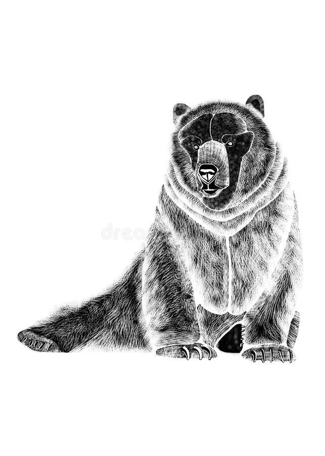 Desenho do urso temível sedentariamente, silhueta preta no fundo branco foto de stock
