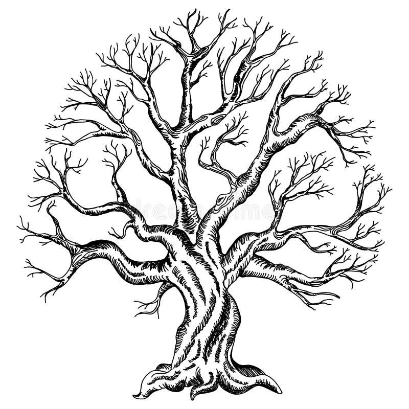 Desenho do vetor da árvore ilustração stock