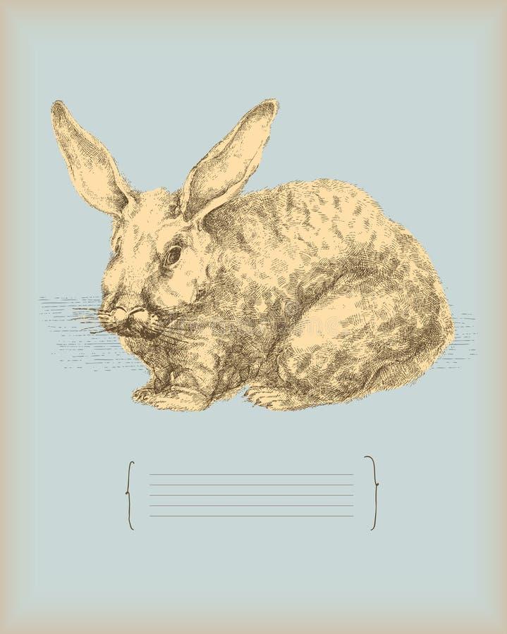 Desenho Do Vintage Do Coelho Foto de Stock