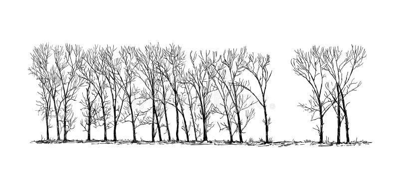 Desenho dos desenhos animados do grupo ou aleia de árvores de álamo no distante ilustração do vetor