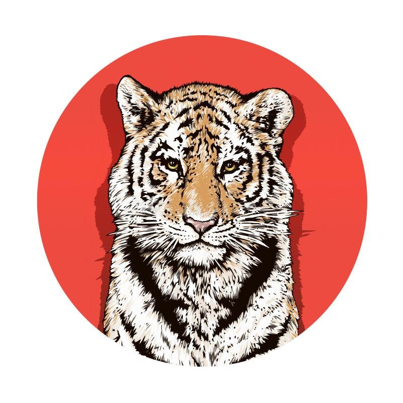 Desenho gráfico da cor de um tigre de Bengal wildlife Gato grande ilustração royalty free