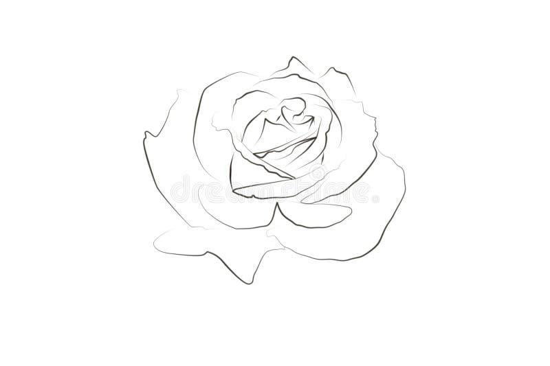 Desenho linear de uma rosa ilustração do vetor