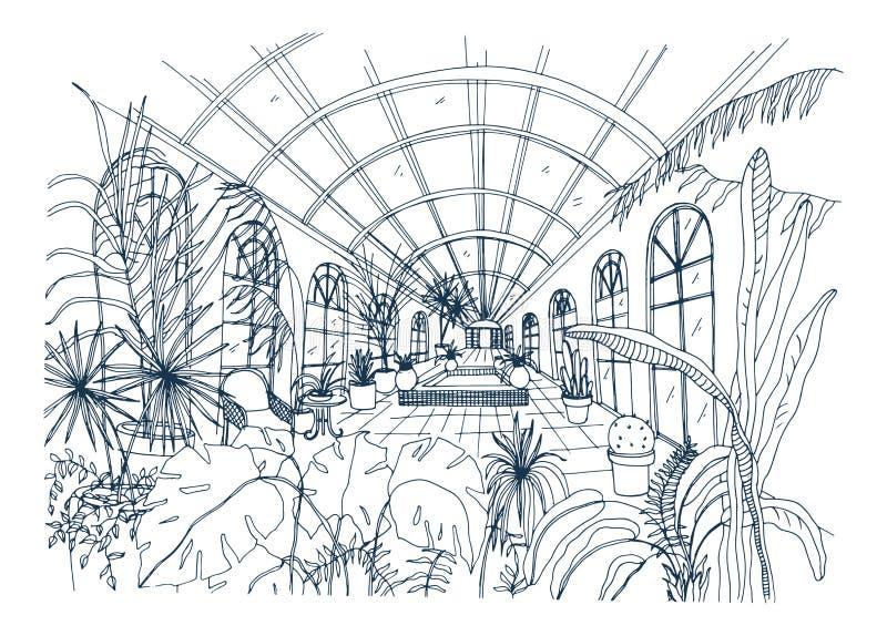 Desenho a mão livre do interior da estufa completamente de plantas tropicais Esboço monocromático da estufa com árvores exóticas ilustração do vetor
