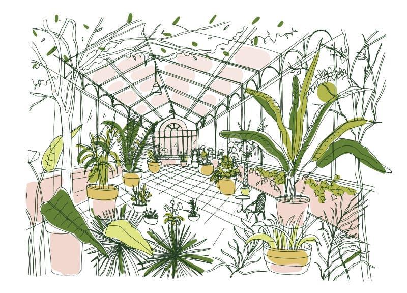 Desenho a mão livre do interior do jardim botânico tropical completamente de plantas cultivadas com folha luxúria Esboço de ilustração do vetor
