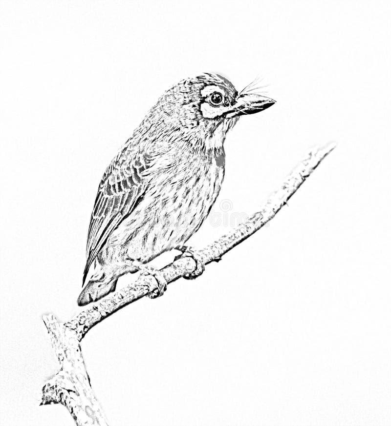 desenho ou esboço do Barbet do Cobre-smith imagens de stock