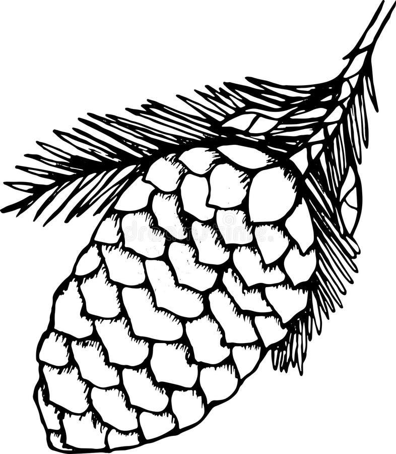 Desenho preto e branco de um ramo com um cone do pinho Planta da beleza imagens de stock
