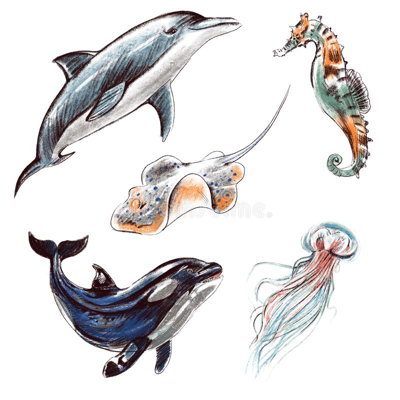 Desenho real?stico colorido imita??o dos l?pis do grupo da ilustra??o de Digitas Criaturas do mar e do oceano: golfinho, baleia d ilustração stock