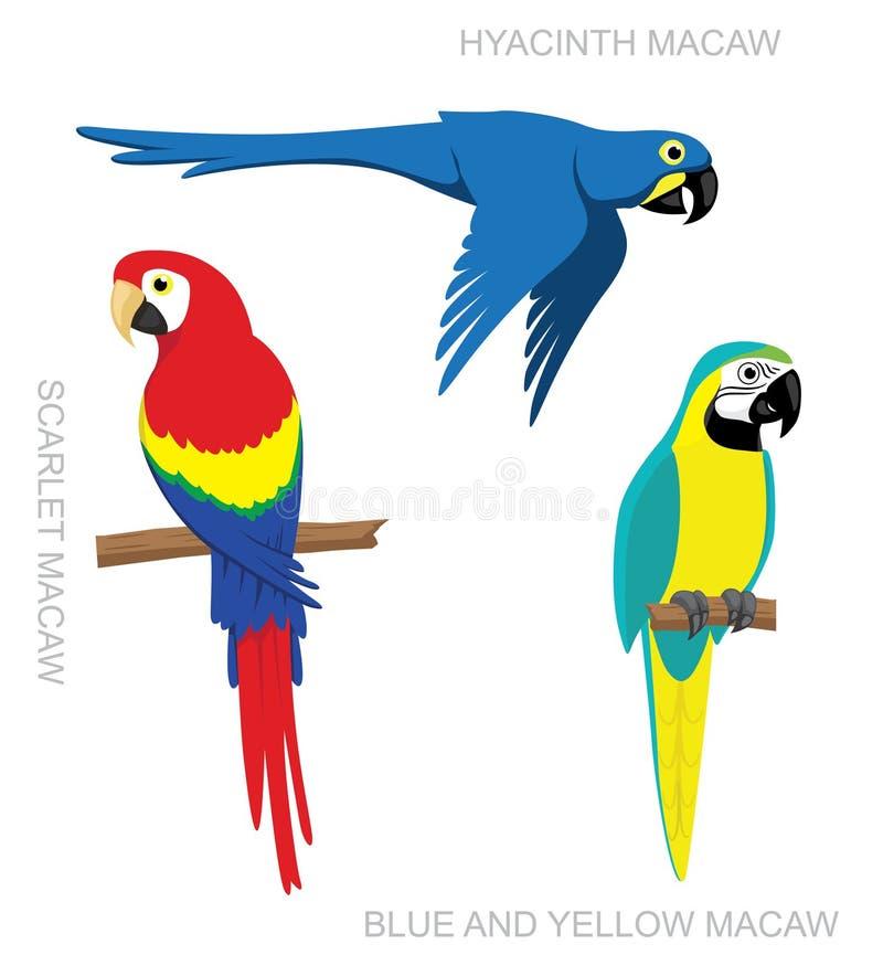 Populares Desenhos Animados Da Arara Do Papagaio Ilustração do Vetor  IT77
