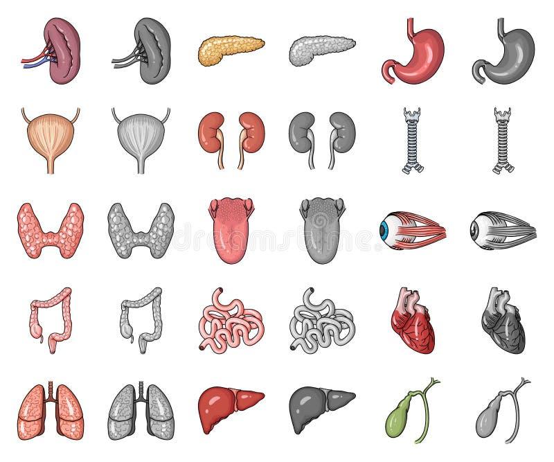 Desenhos animados dos órgãos humanos, ícones do monochrom em coleção ajustada para o projeto A anatomia e os órgãos internos vect ilustração do vetor