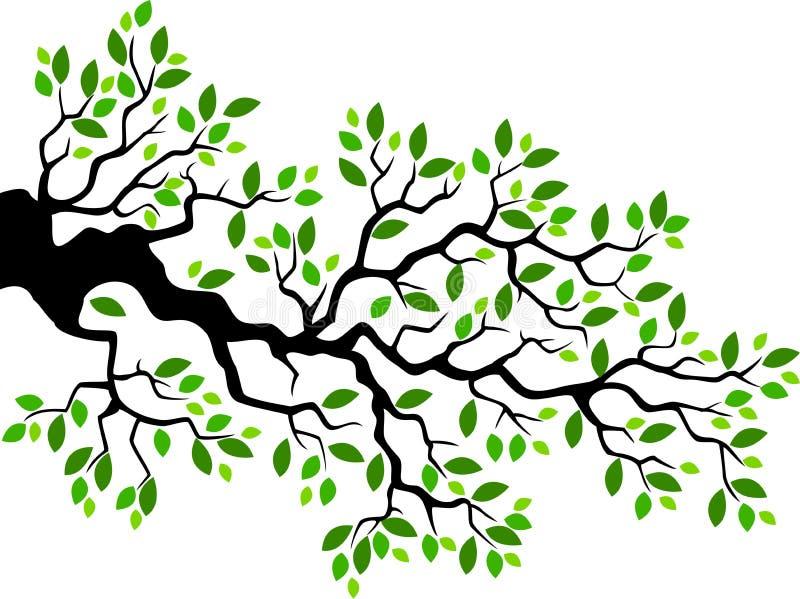 Desenhos animados verdes do ramo de árvore da folha ilustração royalty free