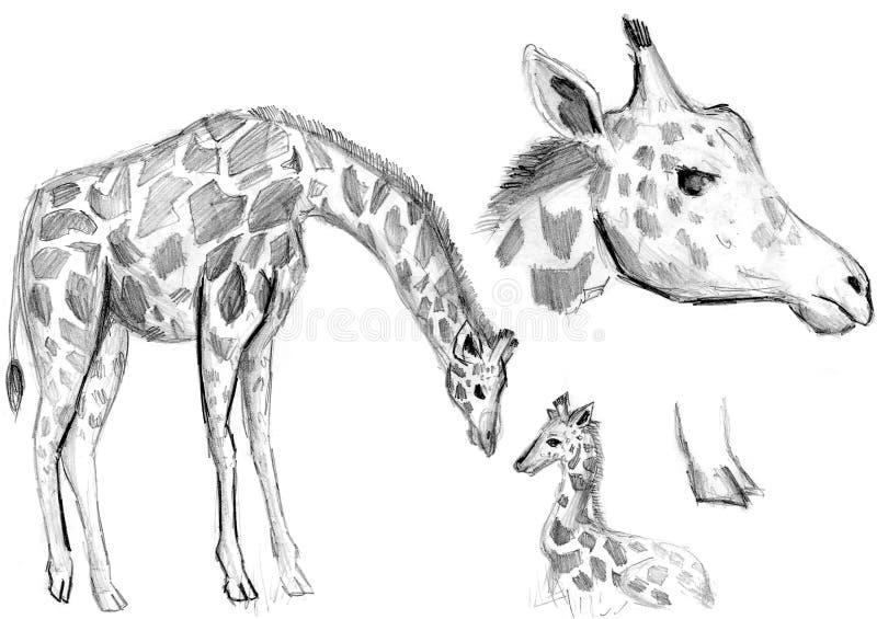 Desenho De Lápis Do Girafa Com Textura De Papel Ilustração