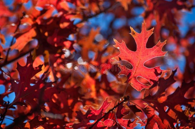 Deseniowi szczegół jesieni liście Przez światła słonecznego zdjęcie stock