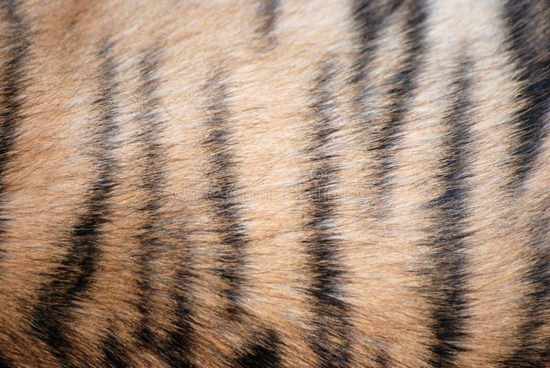 deseniowy futerko tygrys obrazy stock