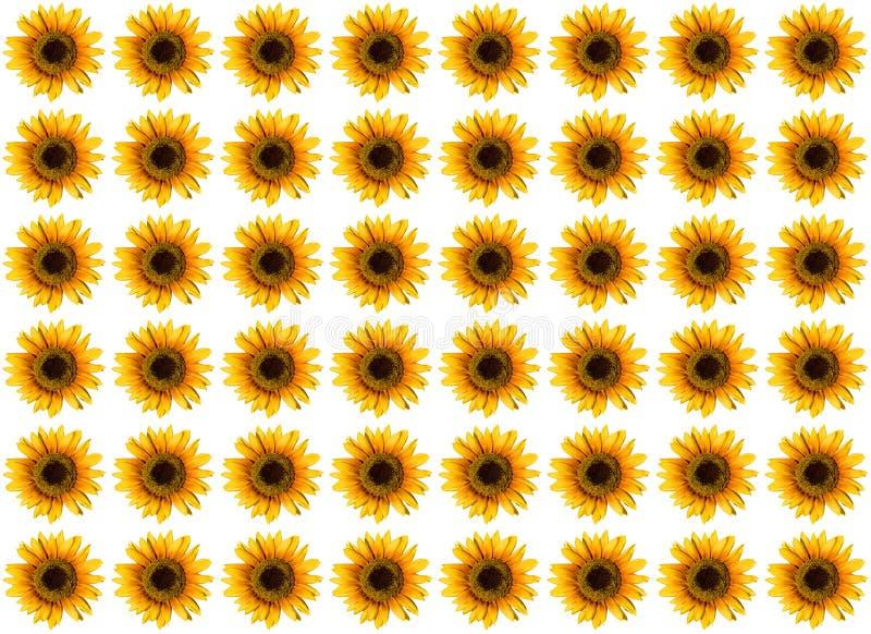 deseniowy słonecznik zdjęcia stock