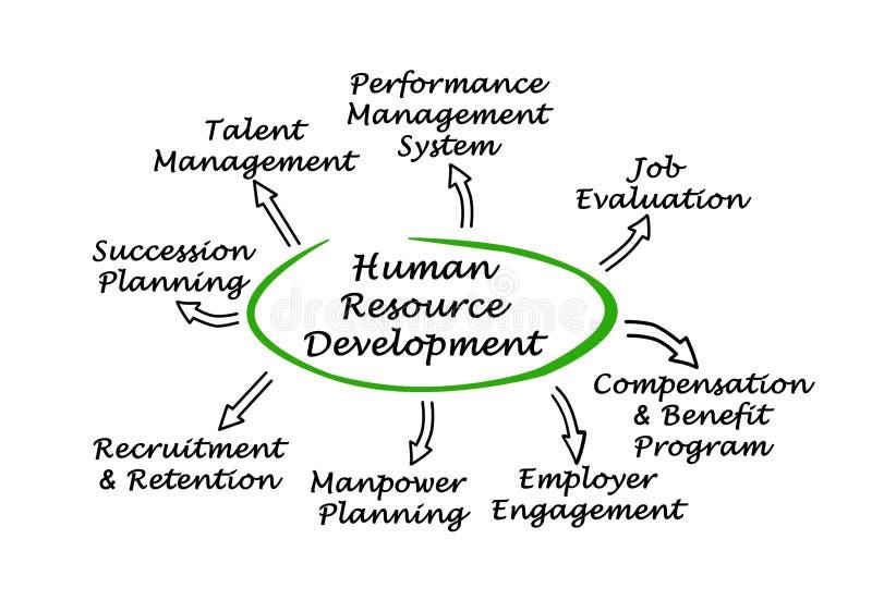Desenvolvimento dos recursos humanos ilustração royalty free