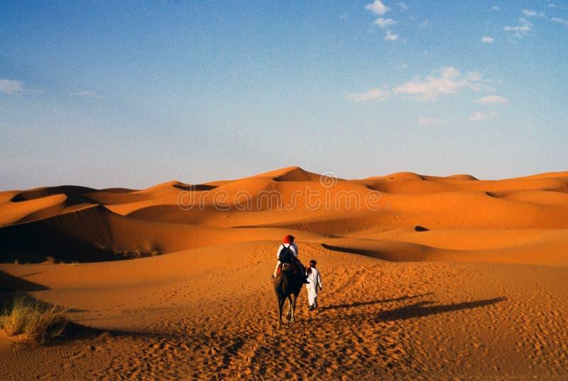 Download Desert stock image. Image of light, animal, dune, camel - 3701269
