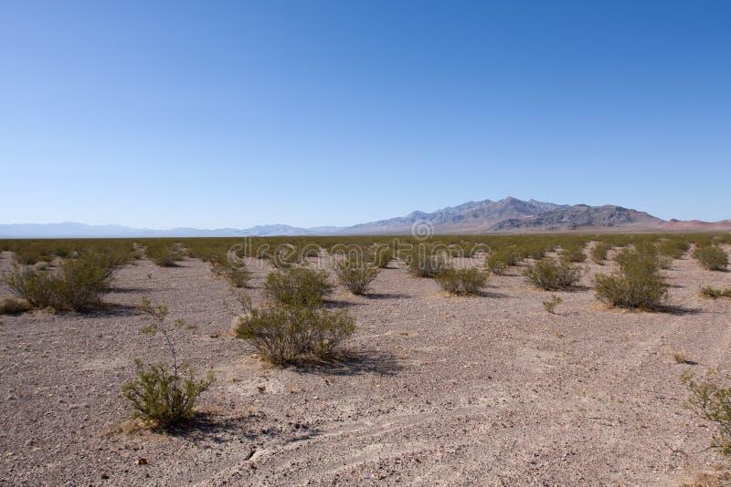 Desert. American desert in California over blue sky stock photo