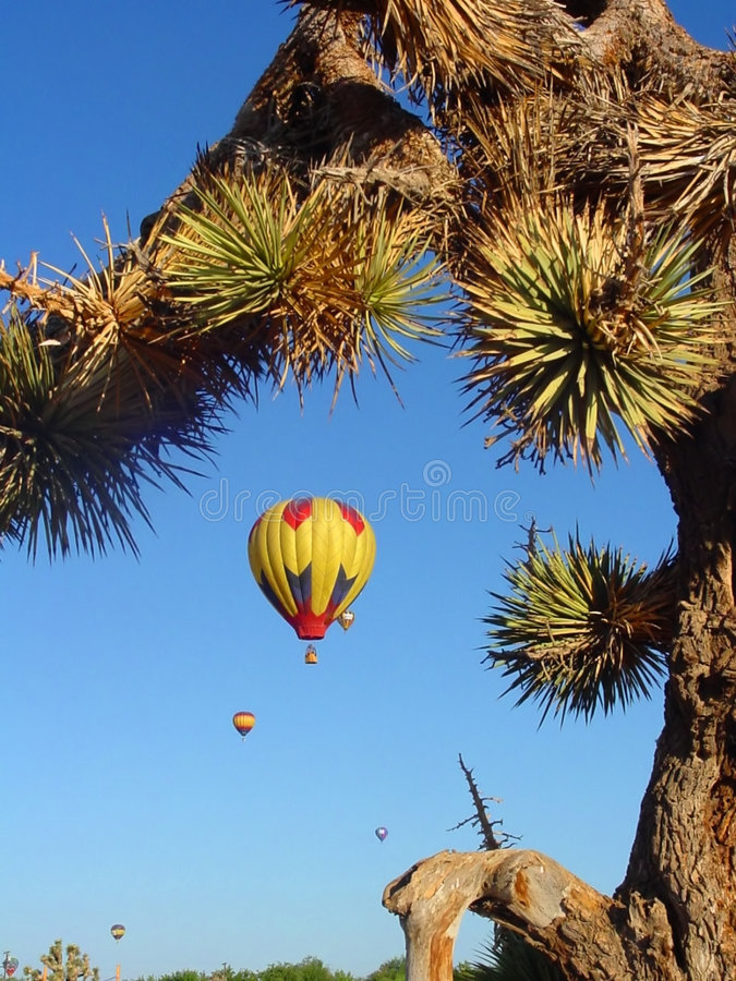 Download Desert Balloon Race stock photo. Image of ride, race, joshuatree - 109102