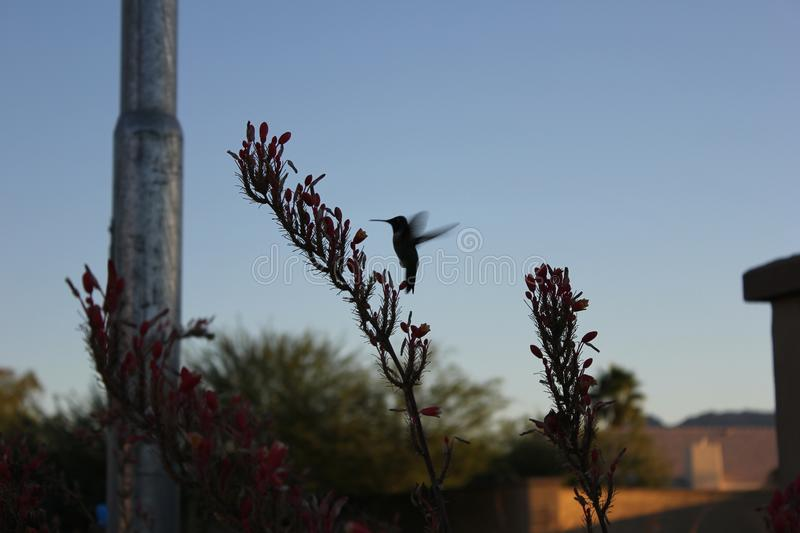 Desert birds tend to be much more abundant where the vegetation is lusher and thus offers more insects, fruit and seeds as food. royalty free stock photography