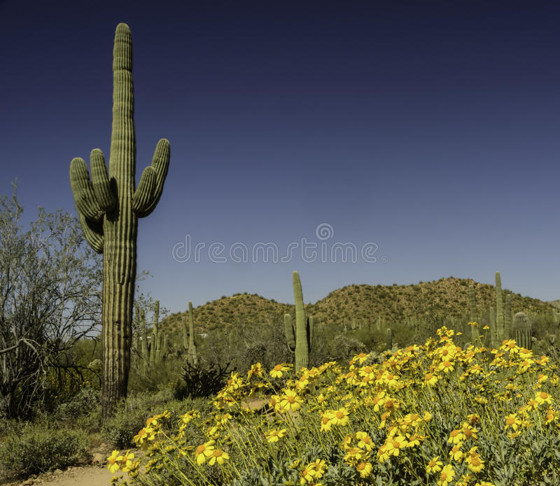 Download Desert in Bloom stock image. Image of hiking, tonto, southwest - 30475633