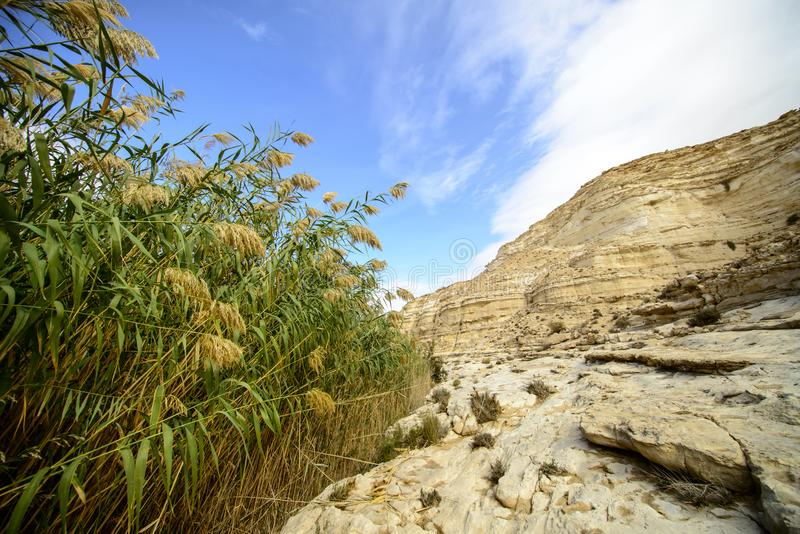 Desert blooming stock photos