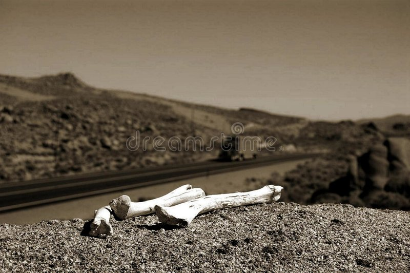 Download Desert bones stock image. Image of abstract, death, gothic - 6149345