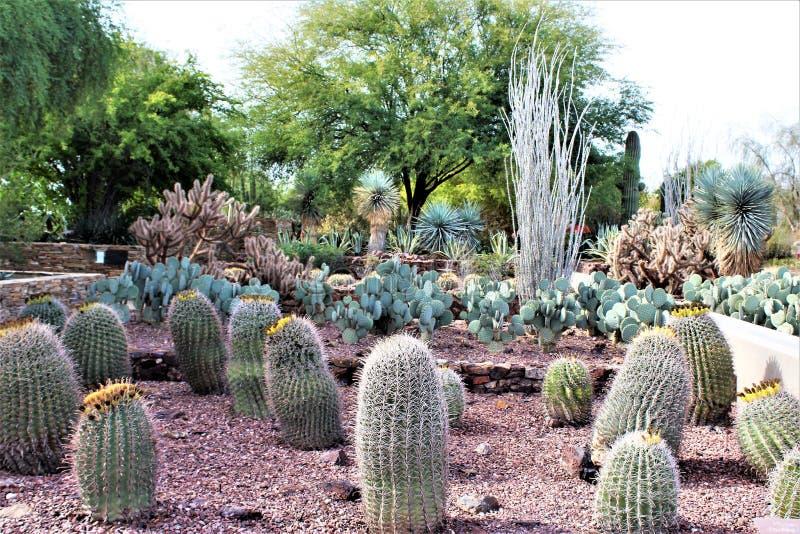 Desert Botanical Garden Phoenix, Arizona, United States. Desert cactus landscape scenery at the Desert Botanical Garden during the winter located in Phoenix stock image