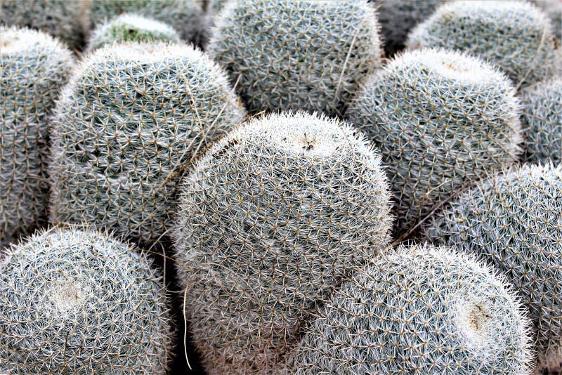 Desert Botanical Garden Phoenix, Arizona, United States stock image