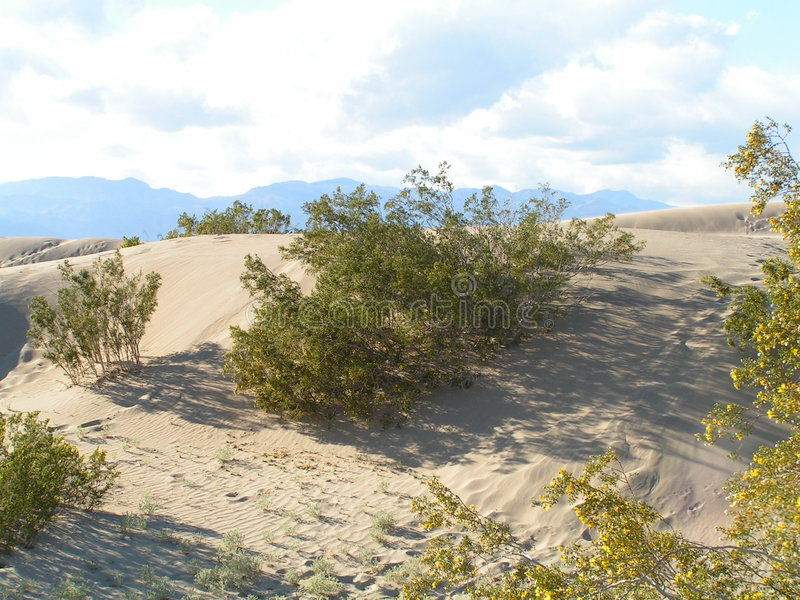 Download Desert Bush stock image. Image of green, dune, landscape - 102693