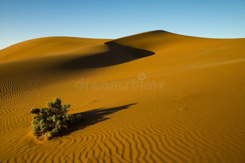 Desert Bush Stock Photos