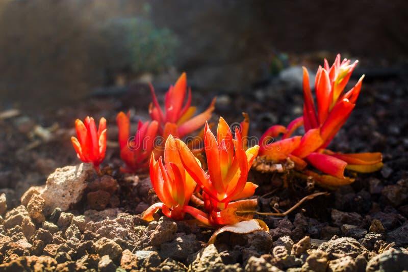 Desert cactus flower landscape royalty free stock photos