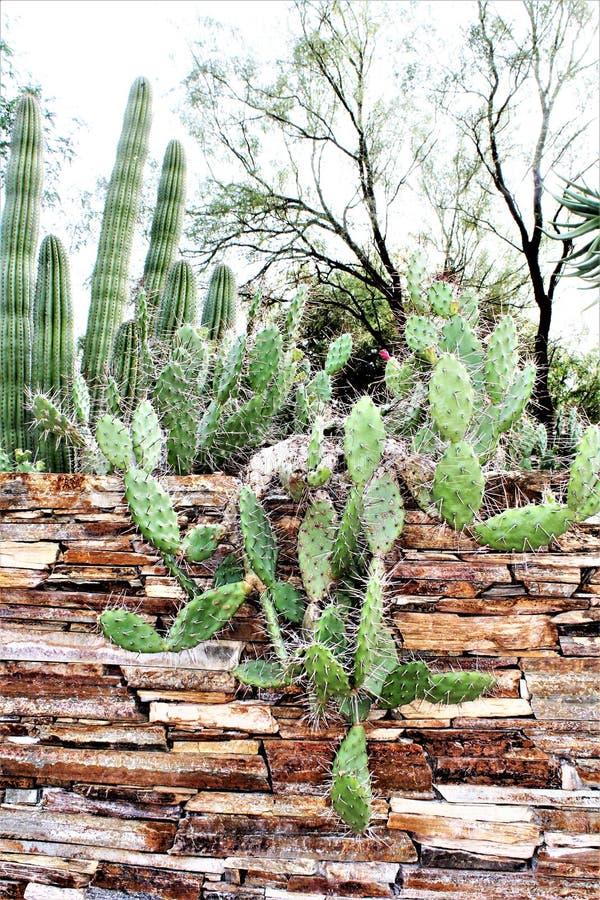 Desert Botanical Garden Phoenix, Arizona, United States. Desert cactus landscape scenery at the Desert Botanical Garden during the winter located in Phoenix stock images