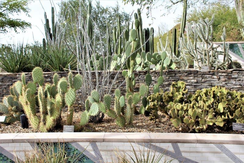 Desert Botanical Garden Phoenix, Arizona, United States. Desert cactus landscape scenery at the Desert Botanical Garden during the winter located in Phoenix royalty free stock image