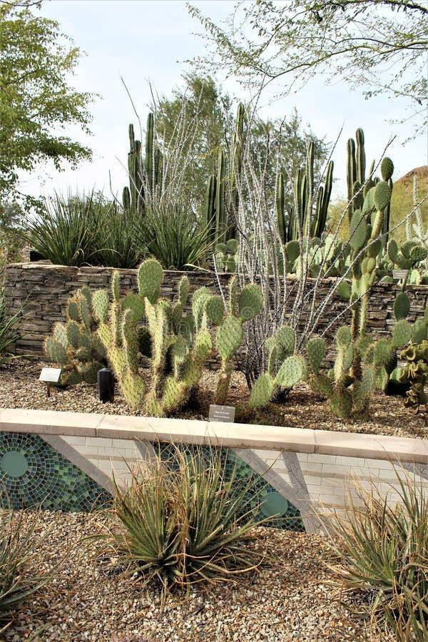 Desert Botanical Garden Phoenix, Arizona, United States. Desert cactus landscape scenery at the Desert Botanical Garden during the winter located in Phoenix stock photography