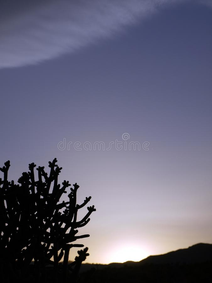 Desert: cactus silhouette at sunset stock photos