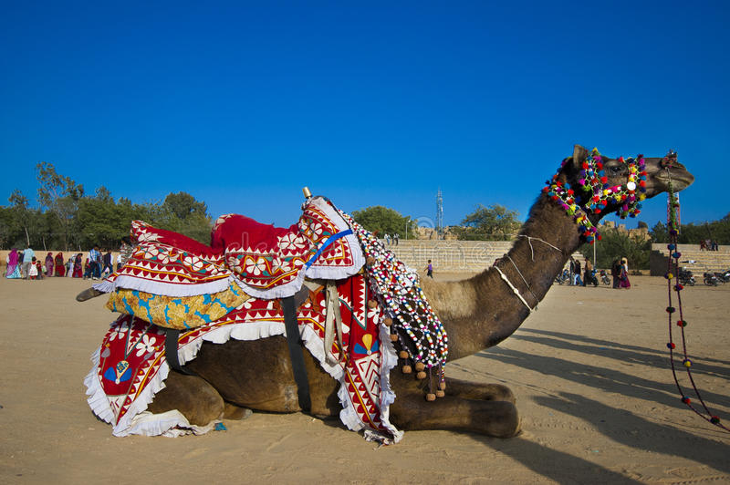 Download A desert camel stock photo. Image of camel, rajasthan - 36725568