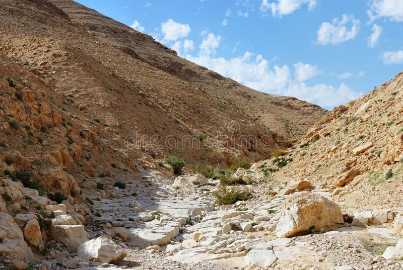 Desert canyon. Kidod Creek in Israel royalty free stock photography