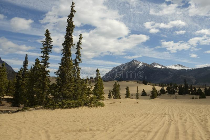 Desert in Carcross, Canada stock photography