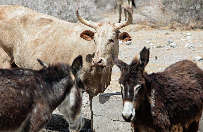 Donkeys Stock Photos - Download 6,366 Royalty Free Photos-3541