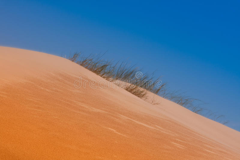 Desert Dune Grass Royalty Free Stock Photography