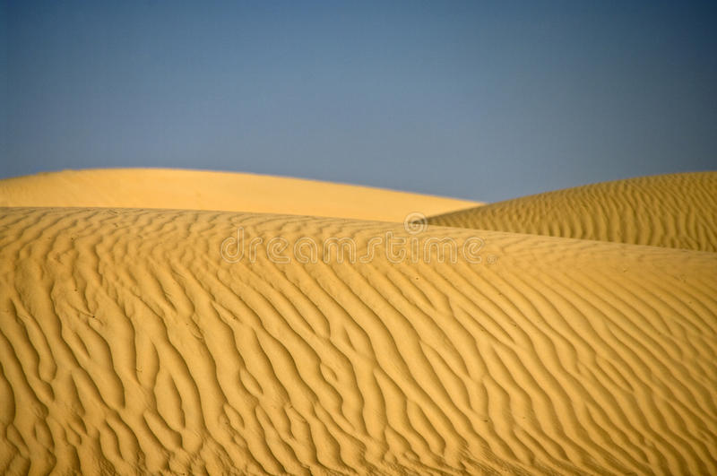 Desert Dune, Wahiba Sands, Oman. A Dune of sand in the Wahiba Sands, Oman royalty free stock image