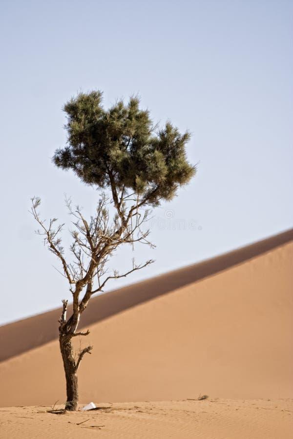 Desert dunes. Sand dunes at morocco desert, Merzouga stock photography