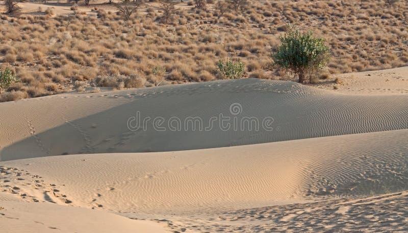 Desert Edge sand-dunes foreground shrubs background royalty free stock images