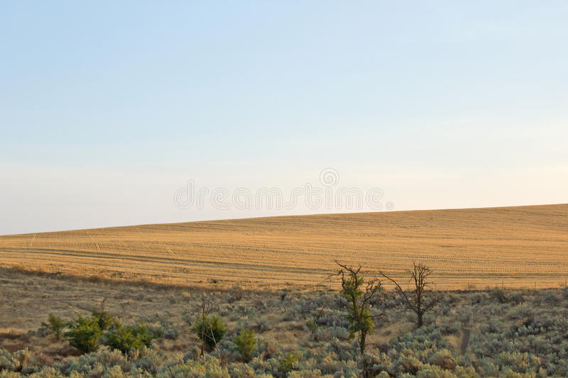 Download Desert And Fields With Blue Sky Stock Image - Image: 26797939